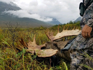 Alaska Moose and Bear Hunt - Dillingham 38