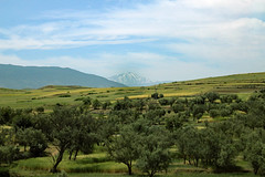 Snow in the mountains, olives on the hills (Explored) (ejhrap) Tags: morocco olive tree mountain