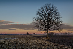 pastel border (Christian Collins) Tags: canoneos5dmarkiv stubble field plowed farm pastel tree oak campo michigan midmichigan snow winter