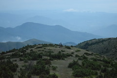 Kopaonik (Serbia) (avasic) Tags: montañakopaonik kopaonikmoutain vegetación vegetation arbustos strubs geografíafísica physicalgeography
