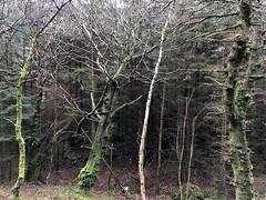 wicklow-mountains-ireland-2017-22 (Various Curious Stuff) Tags: ireland wicklow nature mountains travel