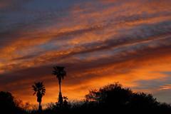 Sunset 4 9 17 #07 (Az Skies Photography) Tags: april 9 2017 april92017 sky rio rico arizona az riorico arizonasky canon eos rebel t2i canoneosrebelt2i eosrebelt2i sun set sunset dusk twilight nightfall cloud clouds skyscape skyline arizonaskyline arizonaskyscape arizonasunset red orange yellow gold golden salmon black 4917 492017