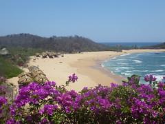 Beach, Water and Bougainvillea (Toats Master) Tags: water beach pacific ocean shoreline mexico huatulco bougainvillea