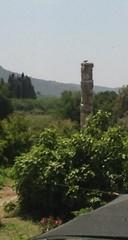 Anglų lietuvių žodynas. Žodis temple of artemis reiškia artemidės šventykla lietuviškai.