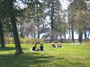 And suddenly the summer is here (almqvist.stig) Tags: summertime östersund badhusparken whitsunholiday