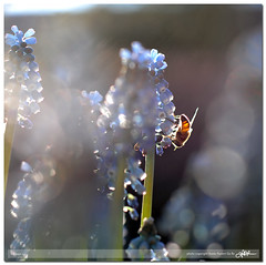 X rays (guido ranieri da re: a little break!) Tags: nature nikon bokeh natura x bee rays xrays indianajones homeshots d700 mygearandme nonsonoglianniamoresonoichilometri guidoranieridare