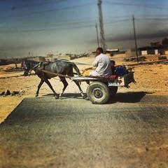 Donkey and car