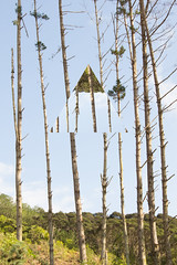 Skinny and Triangle (Simone Genevieve) Tags: sky nature vertical pinetree modern forest photomanipulation outside outdoors photography graphicdesign triangle graphic bluesky treetrunk myart daytime myphotos photomanip photoedit naturephotography treetrunks photoedits myphotography straightline equalateraltriangle pineforst canoneos600d myposts simonegenevievephotography simonegenevieveart pinetreeforst simonegenevievephotogrpahy