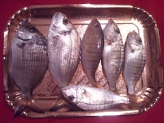 Catture-pesca-dalla-riva
