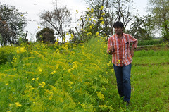 Running thru the sarson ke khet! :) (m3dha) Tags: flowers india yellow farms punjab sarson