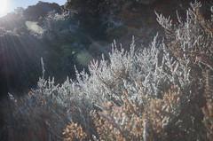 Pastel 2 (--Christophe--) Tags: sun color colors rock volcano soleil bush bright pastel runion plantes roche volcan larunion vgtation brillant buisson brousse