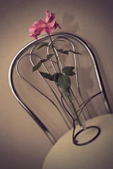 Old Style - Vintage Rose (2) (arfi_arfi) Tags: flowers red roses plants plant flower color macro nature colors beauty rose vintage petals flora blossom retro rosepetals artisticphotography flowerart flowerscolors amazingdetails