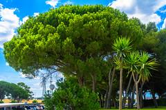 Pinares de Puerto Real - 1 (cives-expat) Tags: españa árboles paisaje pinos puertoreal