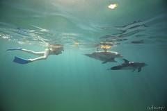 Bimini Dolphin Swim - 20/2013 (Wildquest Bimini) Tags: wild swimming swim dolphins dolphinquest wildquest dolphinunderwater swimwithdolphin atmoji