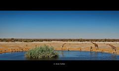 Gran paisaje de Etosha 2. Etosha National Park (Jess Gabn) Tags: landscape paisaje giraffe namibia etosha jirafa jesusgaban