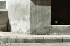 Emboscada (Martnez Clares) Tags: street espaa cats calle andaluca spain puerta gatos granada portal gor martnezclares