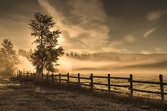 Here Comes The Sun (Lane Rushing) Tags: tree fog sunrise fence montana grandmother backlit silhoutte d600 bigmomma 2470mmf28 thepinnaclehof kanchenjungachallengewinner storybookwinner storybookttwwinner k2challengewinner motmwinner tphofweek227 motmfeb14