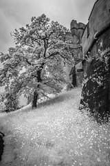 Arundel Castle (code poet) Tags: travel england sky blackandwhite bw tree castle grass rock clouds ir 350d westsussex unitedkingdom infrared 1022mm arundel arundelcastle
