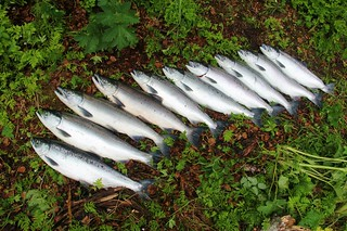 Alaska Fly-out Fishing Lodge 44