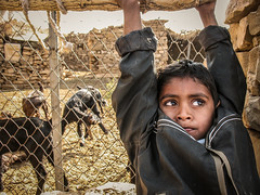 Desert Boy (Synghan) Tags: boy india canon village desert indian goat powershot safari camel goats jaisalmer manju a630