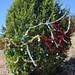 Trees_of_Loop_360_2013_214