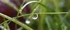 Water Drop (flow-to-graff) Tags: nature water canon eos waterdrop eau drop goutte gouttesdeau 700d canoneos700d blinkagain bestofblinkwinners 18135mmisstm canon18135f3556isstm