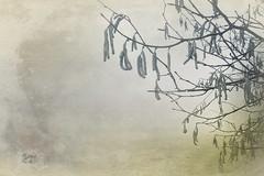 Nebeltag (Frau_Doktor) Tags: winter texture reisen nebel fineart herbst natur pflanzen digiart texturen textur fotoart fotokunst fotobearbeitung texturiert digitalphotoart digitalebearbeitung fraudr