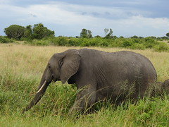 Queen Elizabeth National Park - Uganda