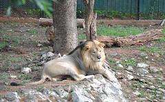 mysore zoo 5
