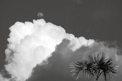 Palm Tree, Towering Cumulus Cloud, and Moon (Ken Pick) Tags: amazonbasin ecuador travel 117picturesin2017 moon southamerica clouds naporiver sachalodge sky blackandwhite outofthisworld