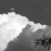 Palm Tree, Towering Cumulus Cloud, and Moon