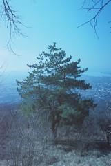 kilátunk (Magnumúrfi) Tags: esztergom hungary tree natural analog color scooter minolta alpha 807si 807 landscape geen duna donau dunaj vaskapu piis pilis negativ landsape travel