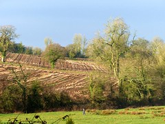 Hey!  There's a Person in My Shot. (Donna JW) Tags: picmonkey landscape farmland fields trees winter valeofberkeley gloucestershire dogwalker ploughedfield