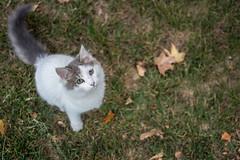 Callie (leoleamunoz) Tags: cat pet mascota gato gata animales animal worldofanimal cenital