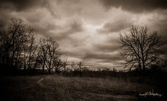 love me a good storm (skeem125) Tags: weather clouds nature landscape storms trees sepia