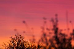 Sunrise (Jeferson Felix D.) Tags: sunset sunrise sun sol paradise por do pordosol amanhecer canon eos 60d canoneos60d 18135mm rio de janeiro riodejaneiro brazil brasil photography fotografia photo foto camera