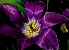 purple (JoelDeluxe) Tags: albuquerque biopark botanical garden nm newmexico joeldeluxe