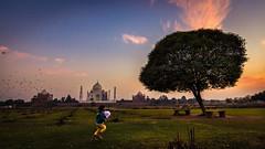 Run Lola Run - Agra, India (Kartik Kumar S) Tags: taj tajmahal agra mehtab bagh kid child run sunset clouds colors trees park lawn uttarpradesh india canon 600d tokina 1116mm places travel people
