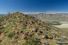 Coyote False Summit (kevin-palmer) Tags: anzaborregodesert statepark california sonorandesert spring march nikond750 sunny blue sky tamron2470mmf28 agave ocotillo borregosprings sandiegocounty coyotemountain hot falsesummit sanysidromountains circularpolarizer clouds