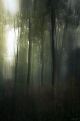 ... (montier_isabelle) Tags: forêt bois obscur clair icm