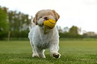 Dog-0492