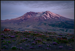 Mt. Saint Helens Blue Hour (Ernie Misner) Tags: f8anderupt mountsainthelens sthelens mountain eruption crater washingtonstate washington erniemisner nikon d800 lightroom nik capturenx2 cnx2