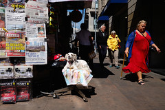 Mexico City: Downtown (Alex Coghe) Tags: streetphotography color dog red blue yellow mexicocity mexico cdmx reportage newspapers people shadows