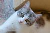 MFC_20170425_9452 (mariofulvio62) Tags: gatti animali animals cats cat