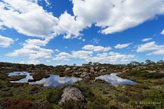 20170301-41-Cloud reflections in tarns (Roger T Wong) Tags: australia greatpinetier np nationalpark sel1635z sony1635 sonya7ii sonyalpha7ii sonyfe1635mmf4zaosscarlzeissvariotessart sonyilce7m2 tasmania wha wallsofjerusalem worldheritagearea alpine bushwalk camp clouds hike landscape trektramp walk