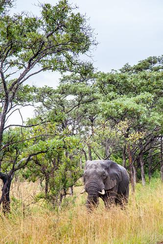 KrugerParkREIZ&HIGHRES-5