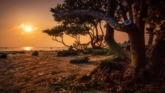Sunset Beach (JDS Fine Art Photography) Tags: sunset trees nature orange colors colours beauty naturesbeauty inspirational peaceful serenity calm magical atmosphere elitegalleryaoi bestcapturesaoi
