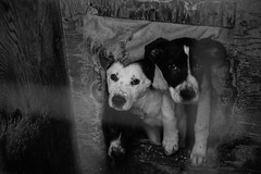 At the shelter (JewishBetelgeuse) Tags: dog puppies shelter homeless help
