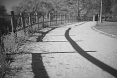 Interrupted Shadows II (Capturedbyhunter) Tags: fernando caçador marques fajarda coruche sorraia ribatejo santarém portugal pentax k1 revuenon 112 12 f12 55mm 55 mc interrupted shadows sombras interrompidas bokeh preto e branco black white monocrome monochrome monocromático manual focus focagem foco outdoor