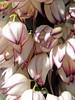 Whitewater Preserve / Sand to Snow National Monument, 2017 (matt-artz) Tags: california californiadesert whitewater whitewaterpreserve sandtosnownationalmonument nationalmonument nationalpark yucca centuryplant flowers flower